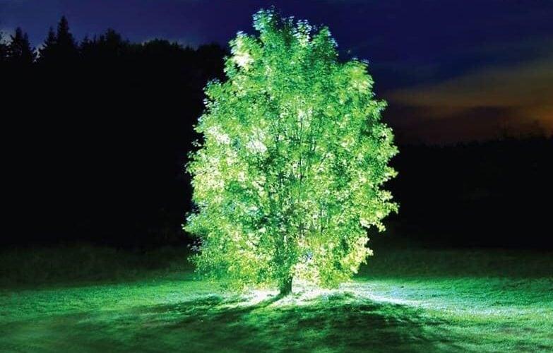 Starlight Avatar: Die erste Pflanze, die im Dunkeln leuchtet